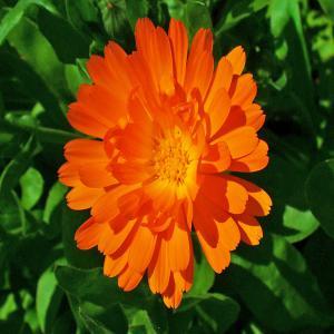 Cosmetiques naturelles 100 a base de plantes selon for Commande plantes par correspondance