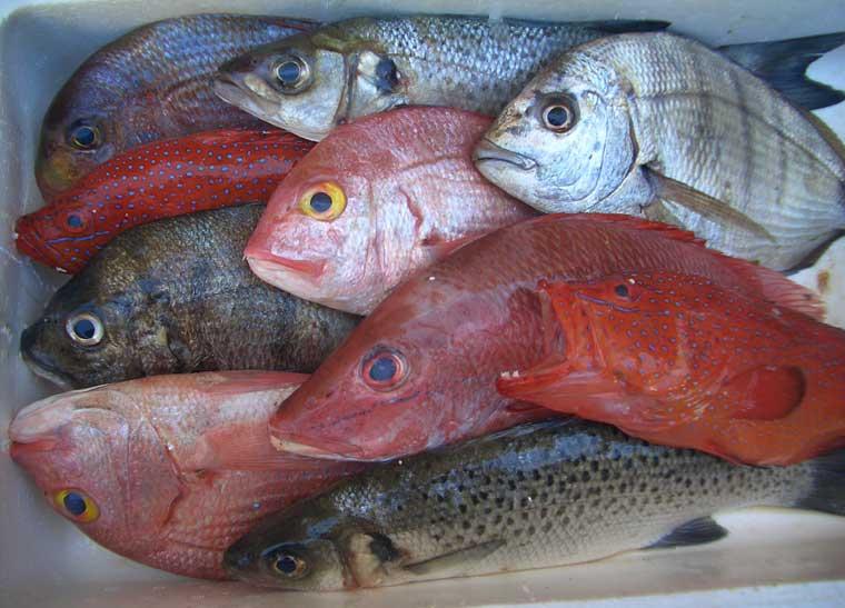 Poissons et produits halieutiques frais en vente les for Vente poisson rouge tunisie