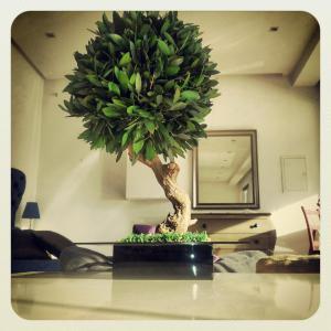 Plantes stabilis es tunisie producteur recherche de for Vente plantes artificielles tunisie