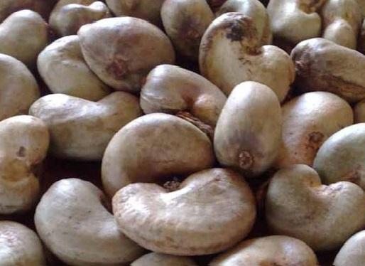 vente en gros noix de cajou avec coque 30000 dhs la tonne 13 tonnes maroc recherche de. Black Bedroom Furniture Sets. Home Design Ideas