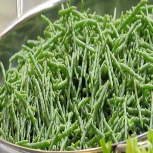Vente salicorne cornichon de mer monde entier 500 la for Vente plantes artificielles tunisie