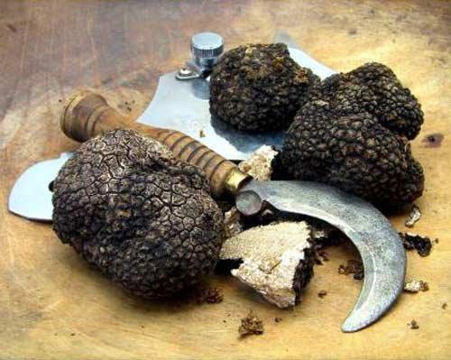 Truffe noire d 39 t tuber aestivum cours semaine 220 euros kilo sous vide entour de - Comment cuisiner les truffes noires ...